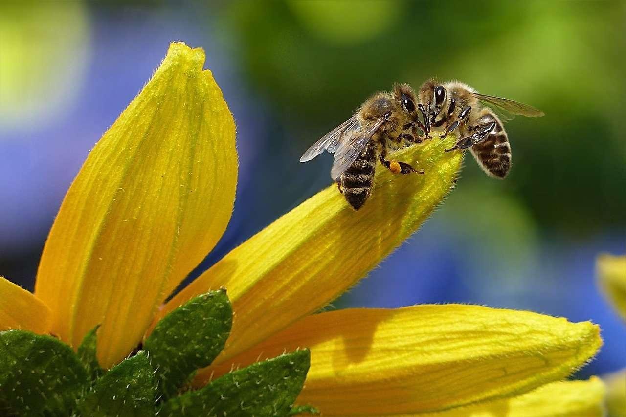 Giornata mondiale delle api!